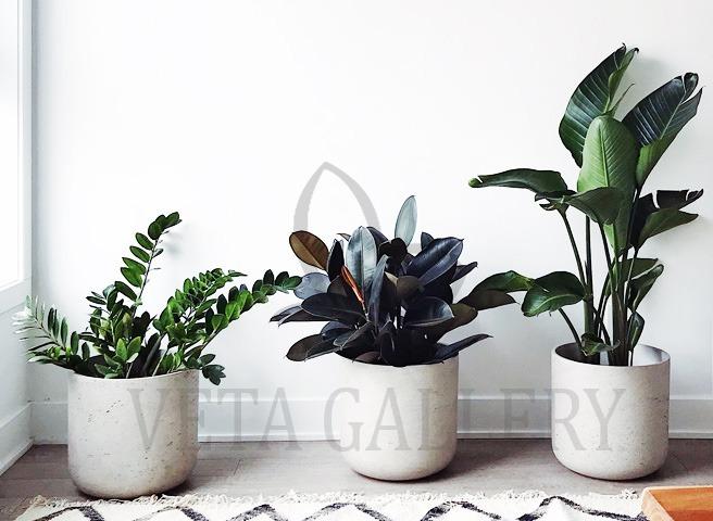 تکنیکهای فنگ شویی برای داشتن خانهای شاد - گل و گیاه